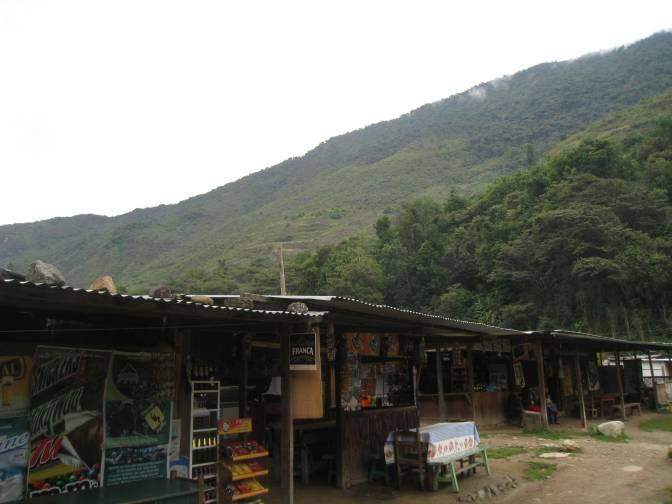 Day 3: Rainforest & Puppytown